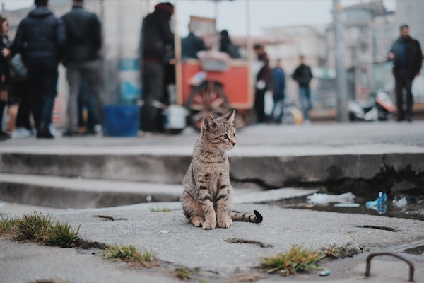 cat sitting on the street