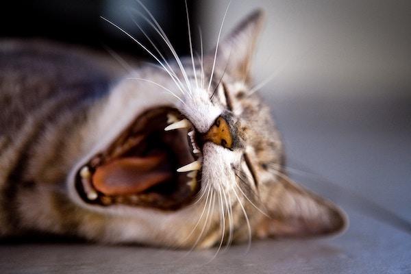 ドイツの歯医者は体力勝負!詰め物が欠けたので治療したよ