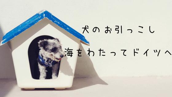 犬の海外渡航