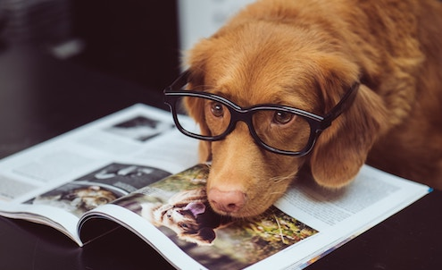 勉強中の犬
