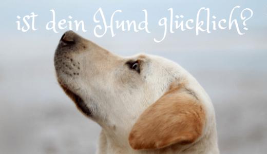 ドイツで犬と暮らすときに注意したい8のルール
