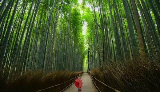 京都を効率的に観光しよう!嵐山・金閣寺・錦市場を巡るおすすめコース