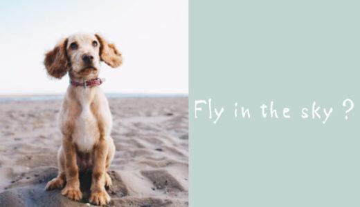 怖がりな犬を飛行機に乗せてドイツへ!犬の反応と到着までの記録