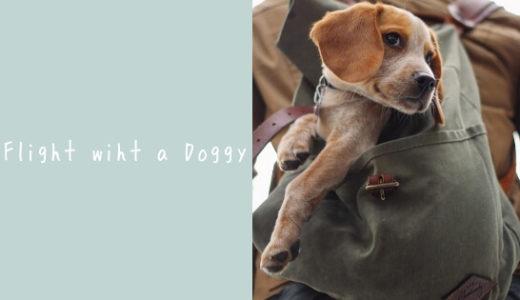 矛盾するIATA基準に混乱!飛行機に乗せる犬のキャリーの選び方