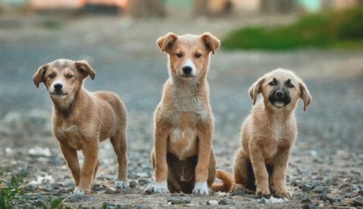 犬税の登録手続 in ベルリン!ドイツで犬を飼うときの手続き