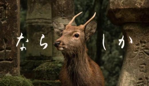 奈良を半日で満喫する観光プラン♪春日大社・東大寺・中谷堂