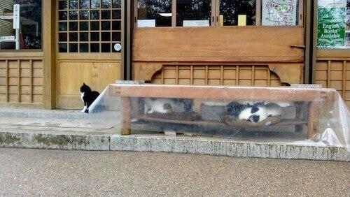 社会性のない猫