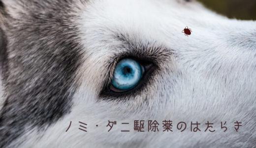 ドイツの動物病院:犬のノミ・ダニ駆除薬ってどんなふうに働くの?