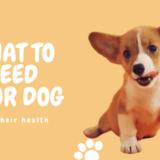 犬のご飯をお肉メインにしたい!餌の内容と犬の体調記録